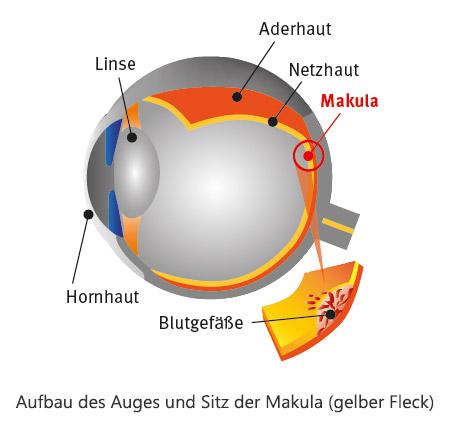 Beste Sicht Premium - Aufbau des Auges und Sitz der Makula