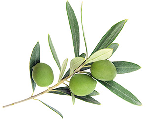 Meditenol Intenz - Oliven